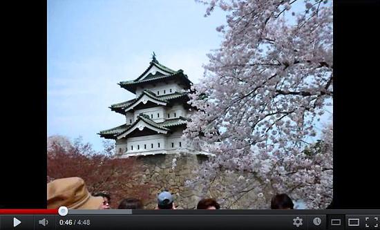 Sakuramaturi