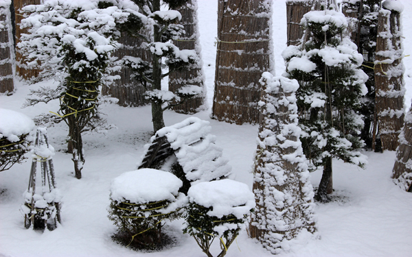 Img_0104a_600x375